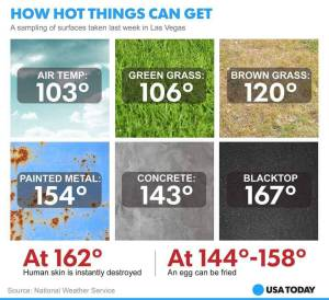 Too HOt For Animals shared by Professional Village Compounding Pharmacy Sacramento